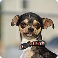 Adopt A Pet :: Cassie - Meridian, ID