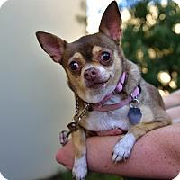 Adopt A Pet :: Roxi - Santa Monica, CA