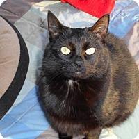 Adopt A Pet :: Stumpy - McConnells, SC