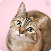 Adopt A Pet :: Maddison - Vancouver, BC