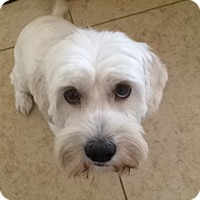 Adopt A Pet :: Bonnie Leigh - Las Vegas, NV