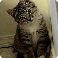 Adopt A Pet :: Finn - Bentonville, AR