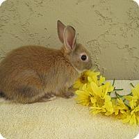 Adopt A Pet :: Linguini - Bonita, CA