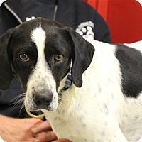 Adopt A Pet :: Willow - Elyria, OH
