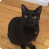 Adopt A Pet :: Joan - Davison, MI