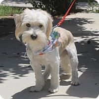 Adopt A Pet :: Mulligan - Corona, CA