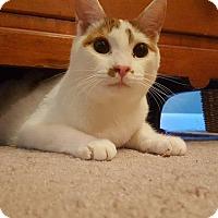 Adopt A Pet :: Milo - Bensalem, PA