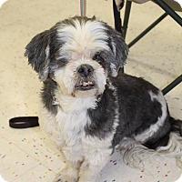Adopt A Pet :: GOONIE - Hurricane, UT