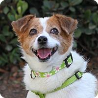 Adopt A Pet :: Mimi - Monrovia, CA