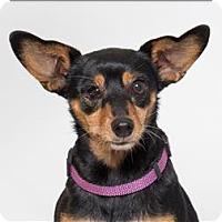 Adopt A Pet :: Amie - San Luis Obispo, CA