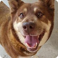 Adopt A Pet :: Samantha - Douglasville, GA