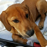 Adopt A Pet :: Jackpot - Kenner, LA