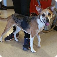 Adopt A Pet :: A - KATY - Ann Arbor, MI