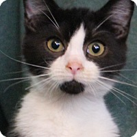 Adopt A Pet :: Oreo - Colonial Heights, VA