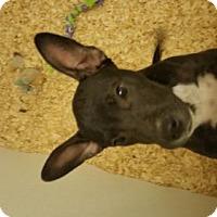 Adopt A Pet :: Mason - Cherry Hill, NJ