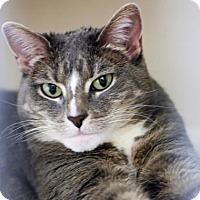 Adopt A Pet :: Colette - Denver, CO