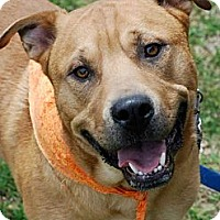 Adopt A Pet :: Odie - Knoxville, TN