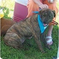 Adopt A Pet :: Gracie - Little River, SC