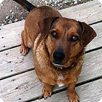 Adopt A Pet :: Sprocky - Ocala, FL