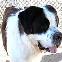 Adopt A Pet :: Rocky - Sparks, NV