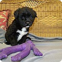 Adopt A Pet :: Alfalfa - Gadsden, AL