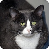 Adopt A Pet :: Smokie - Milwaukee, WI