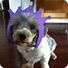Adopt A Pet :: Isiaih