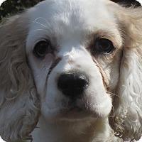 Adopt A Pet :: Angel -Adopted! - Kannapolis, NC