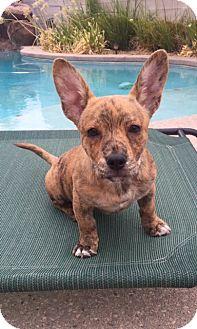 French bulldog rescue las vegas