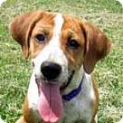 Adopt A Pet :: Libby