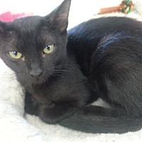 Adopt A Pet :: Ebony - Orange, CA