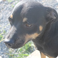 Adopt A Pet :: Trevor - Mt Sterling, KY
