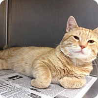 Adopt A Pet :: Oliver - East Brunswick, NJ