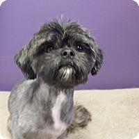Adopt A Pet :: Happy - Schofield, WI