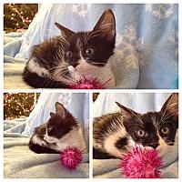Adopt A Pet :: Lila - Island Park, NY