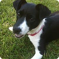 Adopt A Pet :: Magpie - Tracy, CA