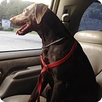 Adopt A Pet :: KONA - DeLand, FL