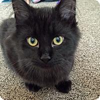 Adopt A Pet :: Squiggy - Troy, MI