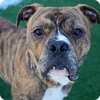 Adopt A Pet :: Brock - Elizabethtown, PA