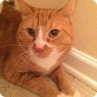 Adopt A Pet :: Bob - McHenry, IL