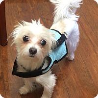 Adopt A Pet :: Hero - Oak Ridge, NJ