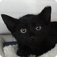 Adopt A Pet :: Frodo - Elyria, OH