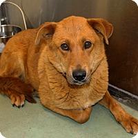 Adopt A Pet :: Clover - Edgewood, NM