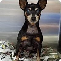 Adopt A Pet :: Lucy - Miami, FL