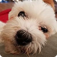 Adopt A Pet :: Rodney - San Diego, CA