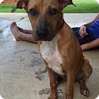 Adopt A Pet :: Rosie - Adopted! - Ascutney, VT
