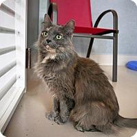 Adopt A Pet :: Katie - Kingston, WA