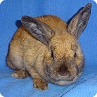 Adopt A Pet :: Georgia - Woburn, MA