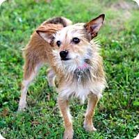 Adopt A Pet :: BASIL - richmond, VA