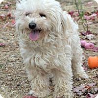Adopt A Pet :: Krissy - Yreka, CA